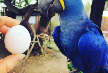 FERTILE OSTRICH AND PARROTS EGGS WITH PARROTS BIRDS AVAILABLE FOR SALE. Text,Call or WhatsApp + 1 (440) 895-7979