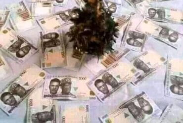 Good Day Sir And Ma, My daddy is here to help people, who are ready to open way to his/her life,call daddy on +2348184092262 or WhatsApp me +2348184092262 Winning Elections *Ritual money without human blood *Lotto number *Pregnant problem *Child Problem *Promotion *Sickness *Yahoo work*Etc