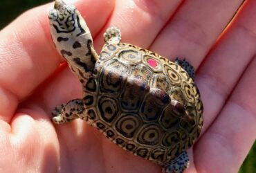 Tortoise, Turtles, Chameleons, Geckos and iguanas