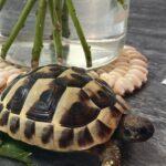 tortoiseworld00